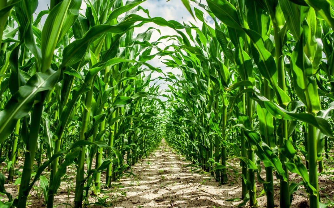 Peak Precision: How GPS Can Help Your Agribusiness